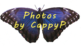 Photos by CappyP
