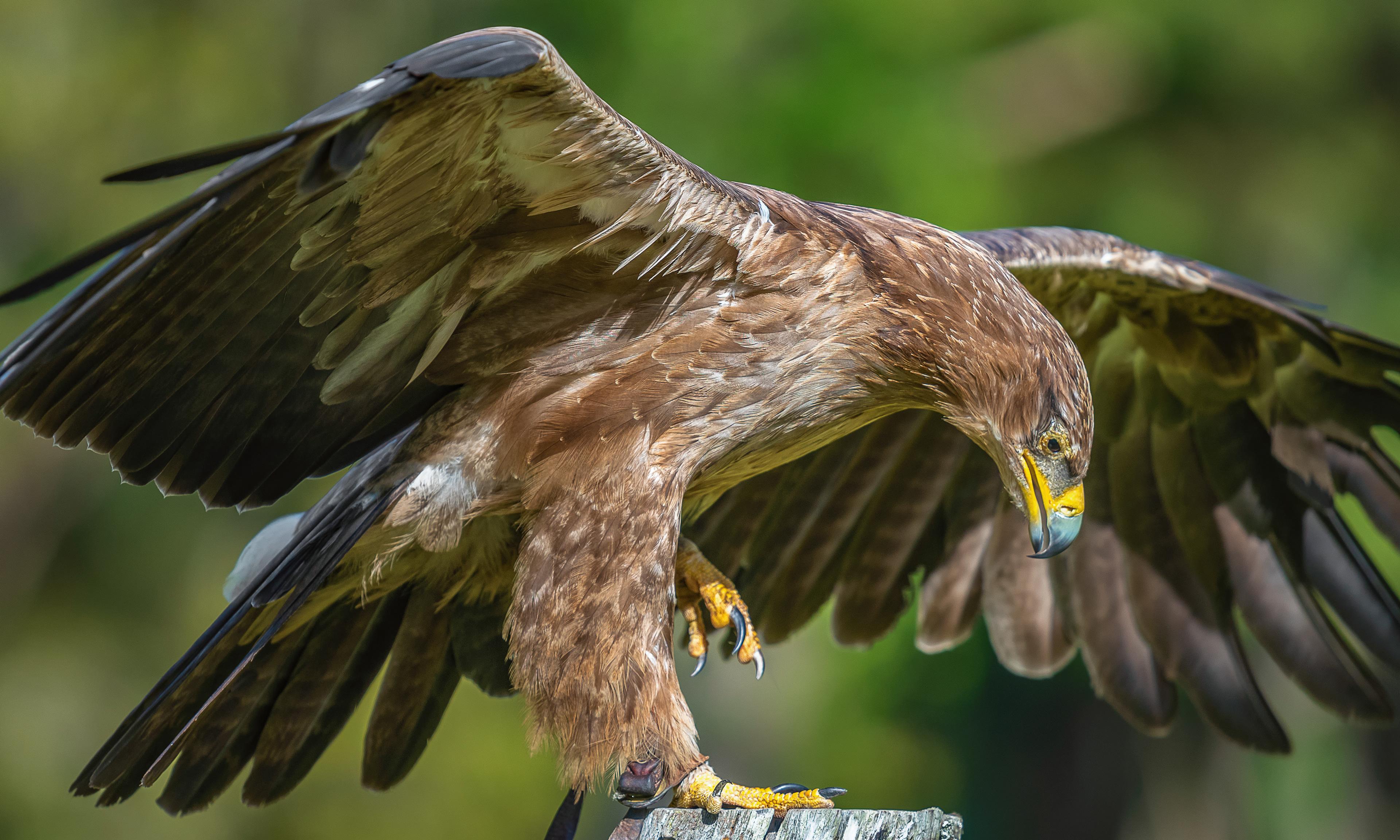 хищные птицы саратовской области обоям блондинка