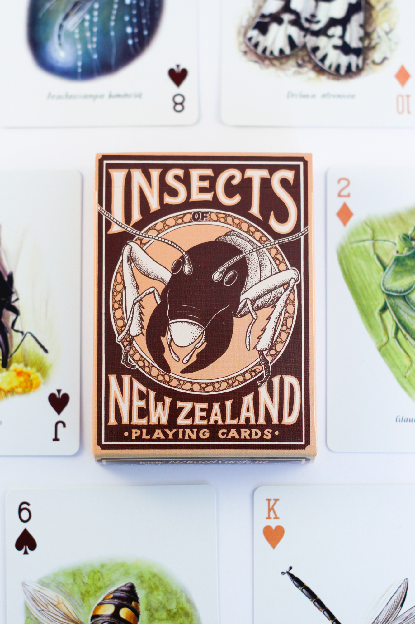 Emma Scheltema Illustration Insects Of New Zealand Playing Cards