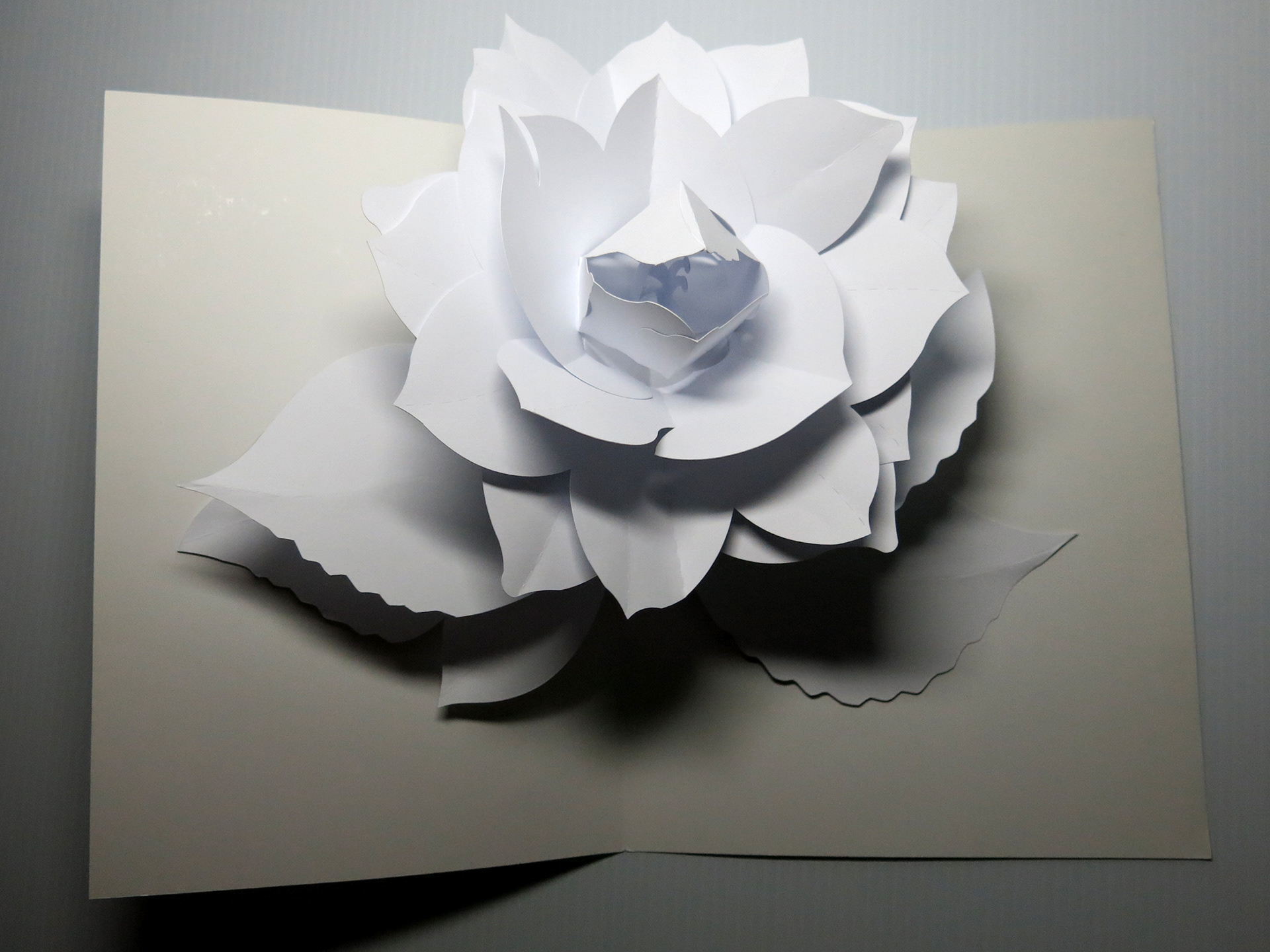 Mike Malkovas Paper Engineering Pop Up Gardenia