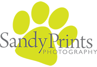 Sandra McCarthy - Proffessional Photographer