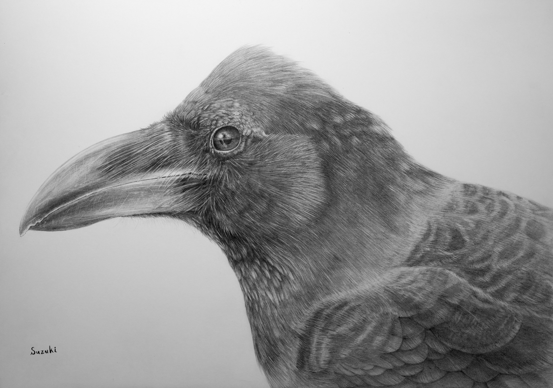 Pencil drawing bird crow