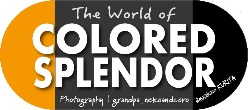 Masakazu Photo/ Colored Splendor(JPN)
